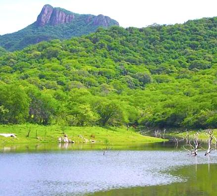 Sierra Álamos – Río Cuchujaqui (Area protegida) AP2_120