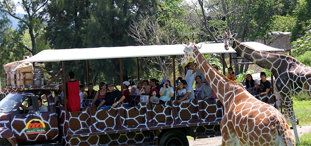 zoologico de guadalajara:
