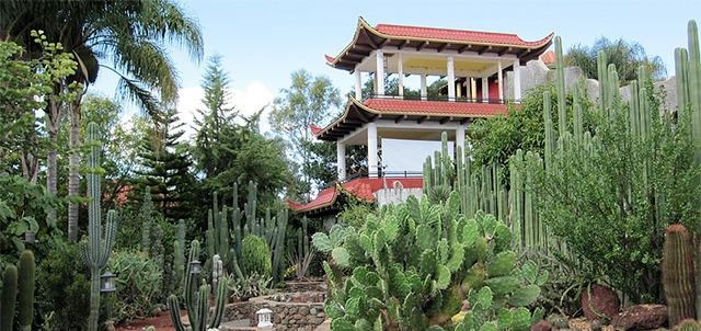 Vivero el japon s tepatitl n m xico for Vivero el botanico