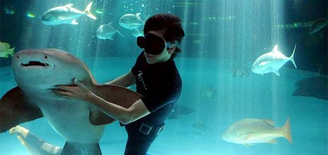 persona nadando en el acuario Mazatlàn