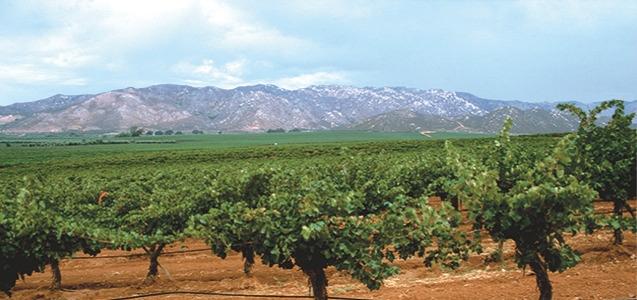 imagen Cultivo de vid en Valle de Guadalupe,Baja California