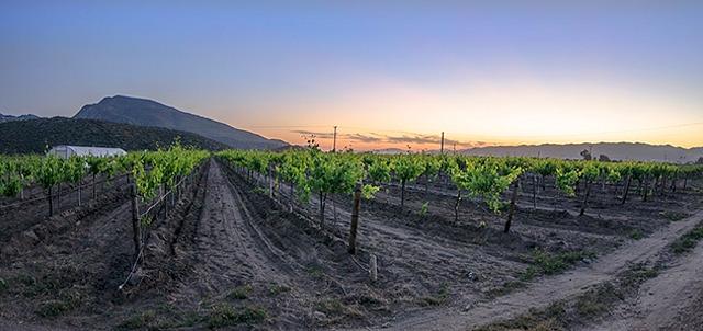 imagen de Casa vinícola L.A.Cetto