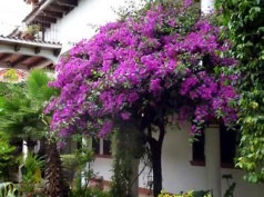 Jovel, San Cristóbal de las Casas