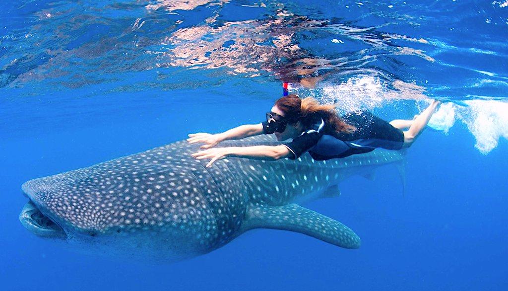 Qué hacer en Holbox, Nado con Tiburón Ballena