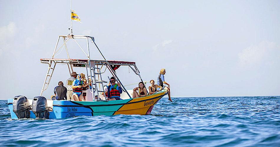 Tour Nado con Tiburón Ballena