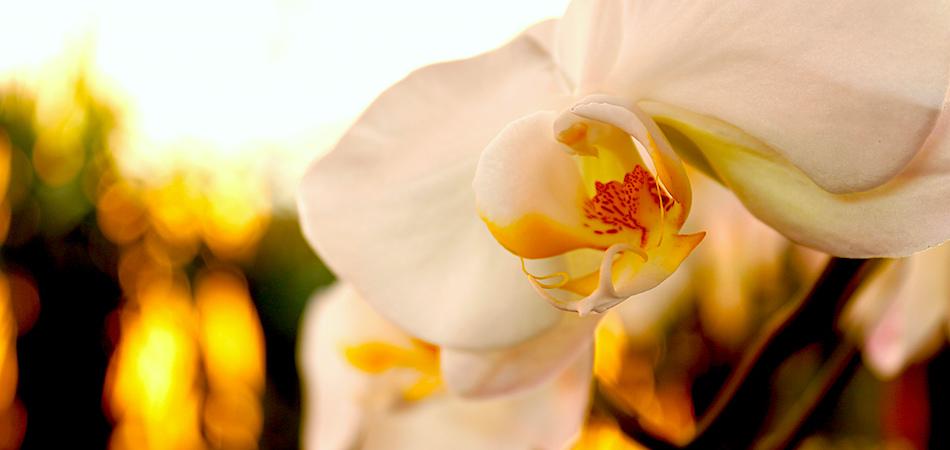 Museo Jardín de las Orquídeas